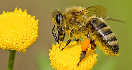 Bee…a citizen scientist! Participate on your own or at a free event.