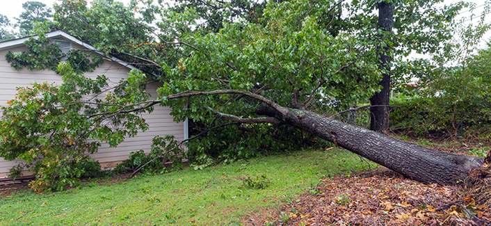 Gwinnett County offers storm debris removal along county, state roads