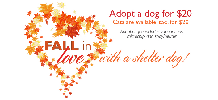 Fall in love with a shelter dog (or cat) this October