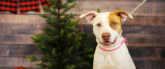 Animal Welfare celebrates the holidays with free adoptions